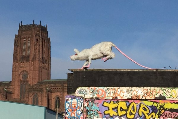 'Super Rat' makes mischief!