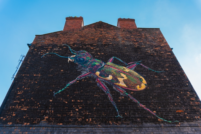 Liverpool 'beetle' to help us 'come together' to protect wildlife
